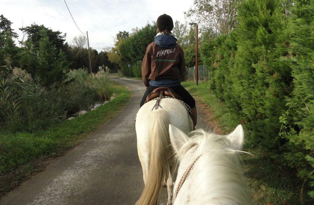 reiten pferd